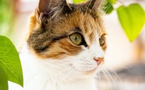 Картинка кошка, взгляд, морда, листья, природа, поза, портрет, боке, пятнистая, пестрая
