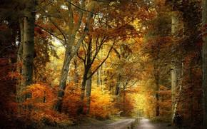 Картинка дорога, осень, парк