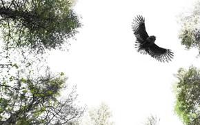 Картинка сова, птица, природа