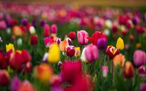 Картинка Pink, Green, Flowers, Yellow, RED, Tulips