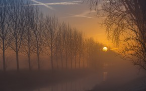 Картинка солнце, деревья, закат, ветки, туман, рассвет, берег, вечер, утро, канал, водоем