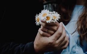 Картинка девушка, цветы, ромашки, руки, мужчина