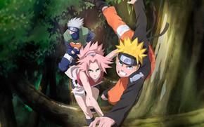 Картинка Сакура, Наруто, Naruto, Какаши