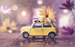 Картинка вода, цветы, дождь, игрушка, доски, машинка, боке