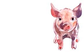 Картинка белый фон, свинья, поросёнок