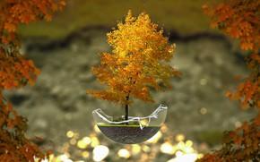 Картинка осень, дерево, бонсай