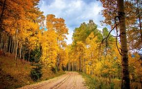 Картинка дорога, осень, лес, природа, листва, autumn