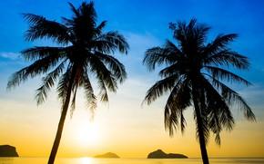 Картинка море, пляж, лето, закат, пальмы, берег, силуэт, summer, beach, sea, sunset, seascape, beautiful, paradise, palms, …