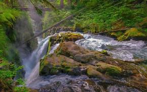 Картинка лес, деревья, мост, река, камни, водопад, Olympic National Park, Sol Duc Falls, Sol Duc River