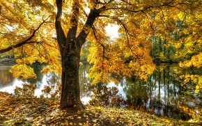 Картинка осень, пруд, парк, Санкт-Петербург, Екатерингоф