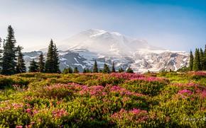 Картинка небо, трава, солнце, снег, деревья, цветы, горы, природа, скалы, США, луга, Mount Rainier National Park, …