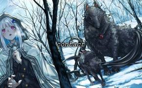 Картинка зима, лес, девушка, фантастические волки