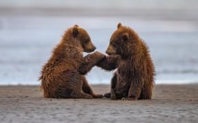 Картинка река, берег, медведи
