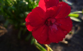 Картинка Макро, Цветы, Обои, Беларусь