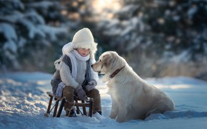 Картинка зима, снег, собака, мальчик, санки, Золотистый ретривер