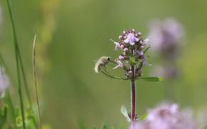Картинка макро, муха, фон, насекомое