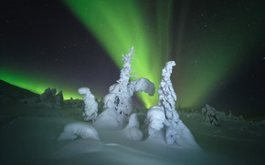 Картинка зима, снег, деревья, пейзаж, ночь, природа, северное сияние, ели, Мурманская область, Оборотов Алексей, Алексей Оборотов, …