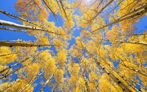 Картинка осень, небо, листья, деревья, yellow, autumn, leaves, tree, осенние