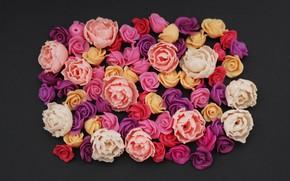 Картинка цветы, фон, розы, colorful, pink, flowers, roses