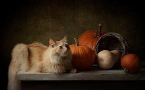 Картинка осень, кошка, кот, взгляд, темный фон, стол, корзина, урожай, рыжий, тыквы, лежит, натюрморт