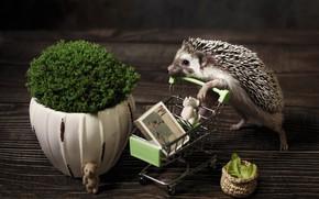 Картинка поза, темный фон, игрушки, доски, растение, паркет, милый, горшок, книга, ежик, тележка, стоит, мордашка, мишки, …