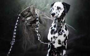Картинка друг, собака, поводок