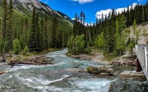 Картинка Банф, мост, горы, деревья, лес, Альберта, ручей, Banff National Park, Канада, течение, камни