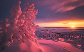 Картинка зима, солнце, деревья, закат, озеро, вид