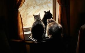 Картинка кошка, кот, стекло, свет, деревья, кошки, ветки, поза, уют, дом, темнота, стол, комната, коты, мебель, …