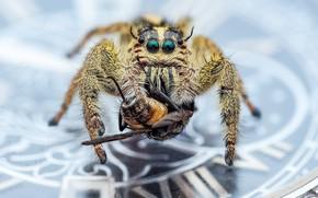 Картинка макро, фон, паук, насекомое, монета