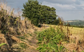 Картинка дорога, поле, трава