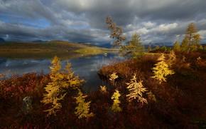 Картинка осень, облака, берег, водоем, ёлочки
