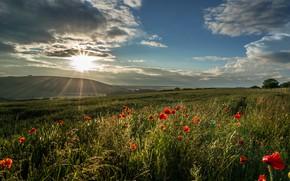 Картинка зелень, поле, лето, небо, солнце, облака, лучи, свет, цветы, синева, маки, вечер, холм, луг, красные, …