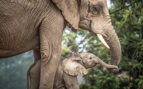 Картинка любовь, малыш, мама, слониха, слоненок