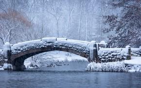 Картинка зима, иней, лес, снег, деревья, птицы, ветки, мост, пруд, парк, река, берег, утки, стая, мороз, …