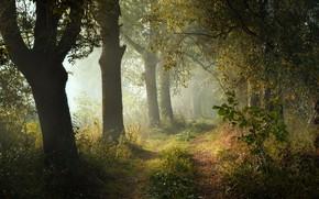 Картинка лес, деревья, пейзаж, природа, парк, дорожка, тропинка, Radoslaw Dranikowski