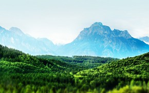 Картинка лес, горы, горизонт