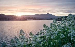 Картинка солнце, цветы, горы, берег, даль, утро, кусты, водоем, поселение