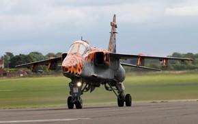 Картинка Jaguar, Истребитель-бомбардировщик, RAF, Sepecat Jaguar, Sepecat Jaguar GR3A