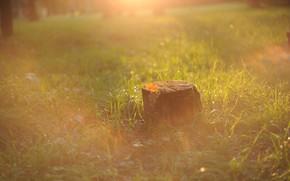 Картинка осень, трава, солнце, лучи, свет, туман, рассвет, поляна, пень, утро, дымка, боке, дубовые, конец лета, …