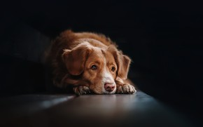 Картинка взгляд, дом, друг, собака
