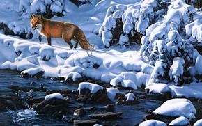Картинка зима, свет, снег, ветки, камни, берег, картина, арт, лиса, сугробы, рыжая, живопись, водоем, Daniel Smith