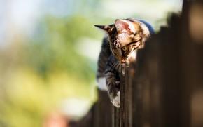 Картинка кошка, свет, поза, котенок, забор, котёнок, боке