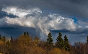 Картинка гроза, лес, небо, облака, деревья, ветки, тучи, природа, дождь, ели, ливень, грозовые