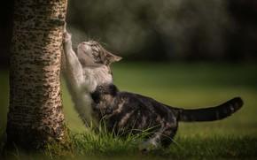 Картинка кошка, трава, кот, дерево, ствол, боке, котейка, когтеточка