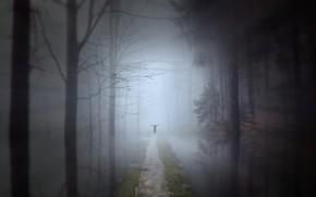 Картинка осень, лес, вода, деревья, ночь, ветки, поза, туман, отражение, рендеринг, фантазия, стволы, перспектива, человек, даль, …