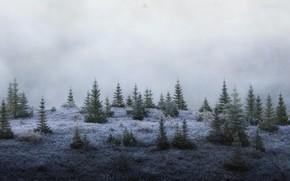 Картинка лес, туман, ёлки