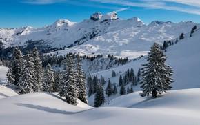 Картинка зима, лес, снег, горы, вершины, ели, сугробы, заснеженные