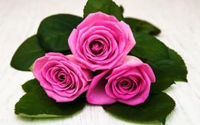 Картинка крупный план, розы, букет, розовые, Olena Rudo