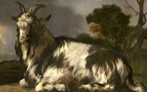 Картинка животные, масло, картина, холст, Ян Баптист Веникс, 1660, Jan Baptist Weenix, Лежащая коза